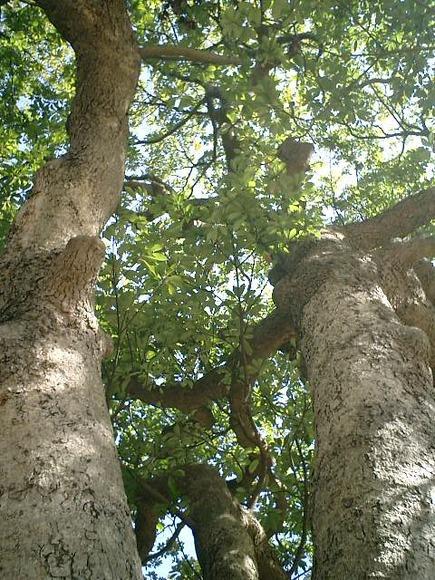 05)鎌倉市「材木座たぶの木公園」